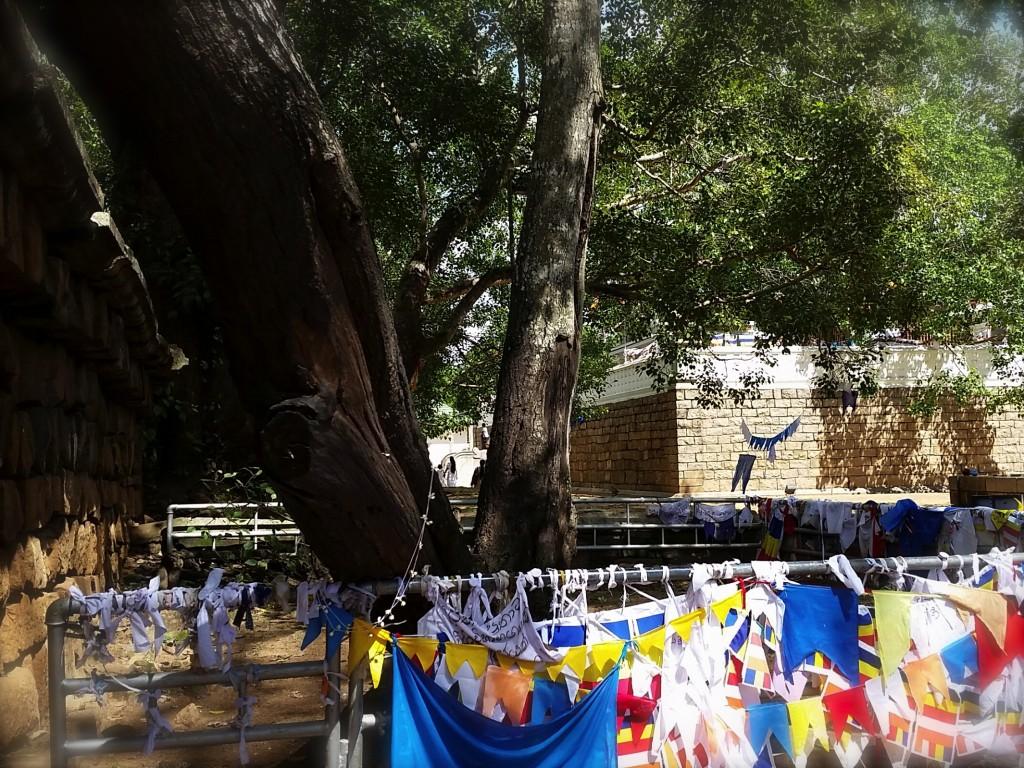 Arbre qui exauce les voeux, Anuradhapura