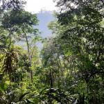 Terre aride il y a 35 ans, le site de Belipola, Mirihawatte, Sri Lanka, a donné le jour à une forêt tropicale d'une riche biodiversité