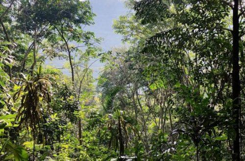 Article : S'il vous plaît, dessine-moi une forêt