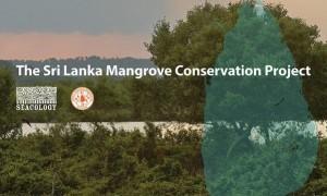 Projet de conservation des mangroves au Sri Lanka