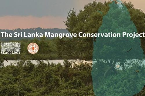 Article : Protection des mangroves, Laudato Si' du Sri Lanka