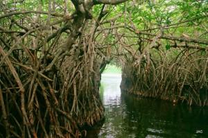 Un écosystème riche en biodiversité